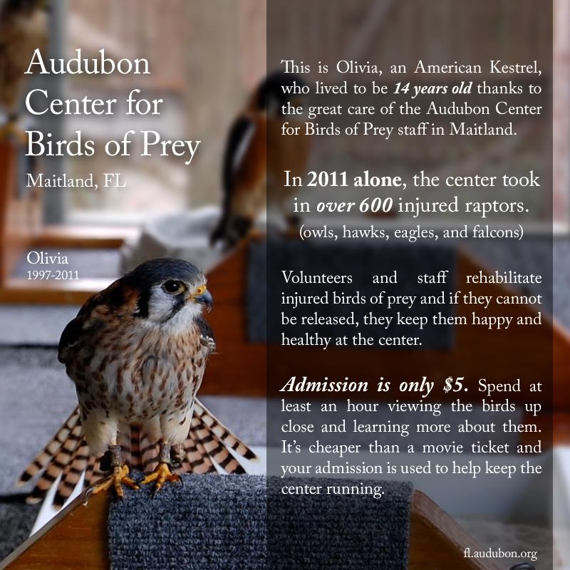 Audubon Center for Birds of Prey, Maitland, FL