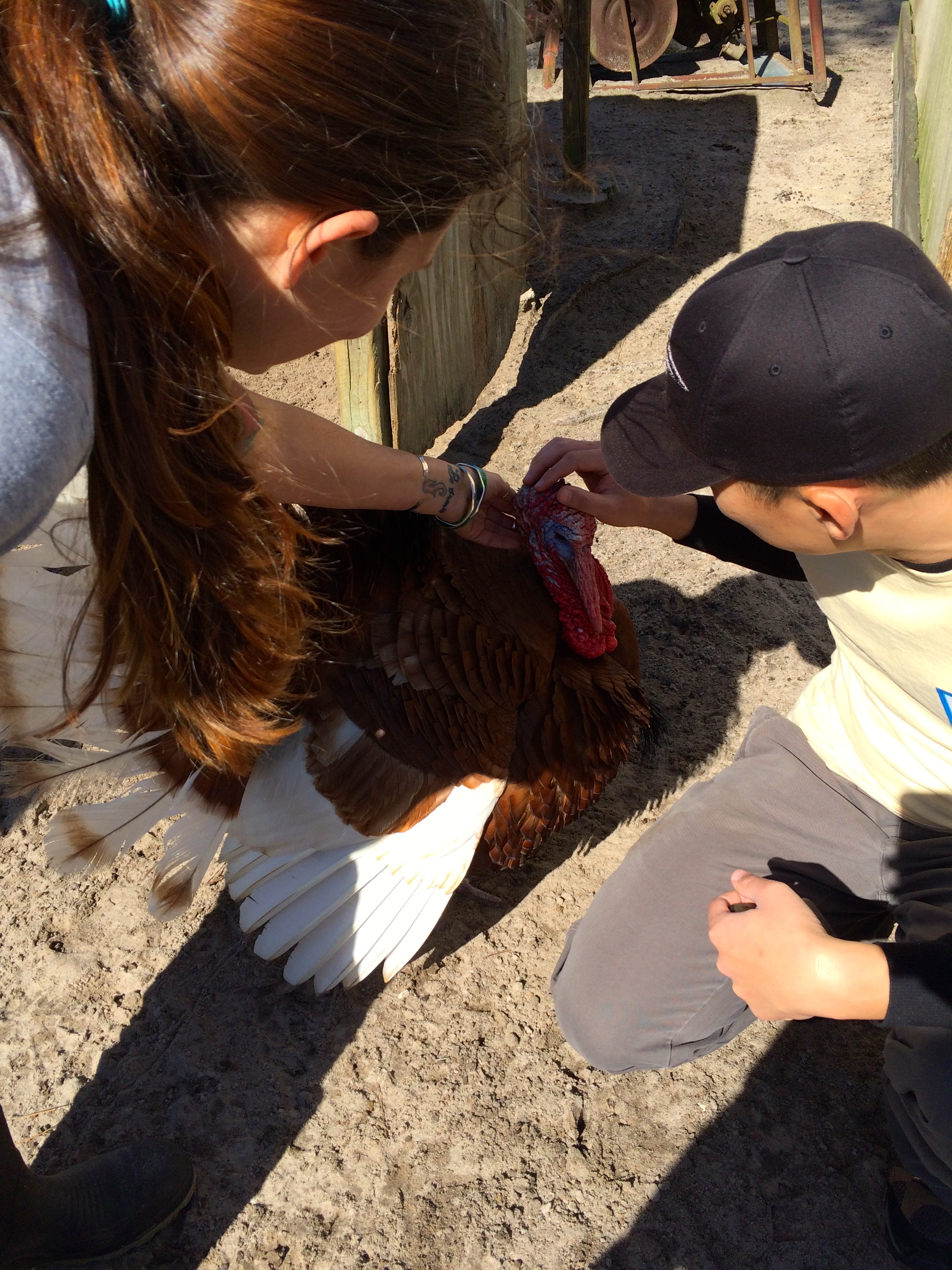 Petting a turkey